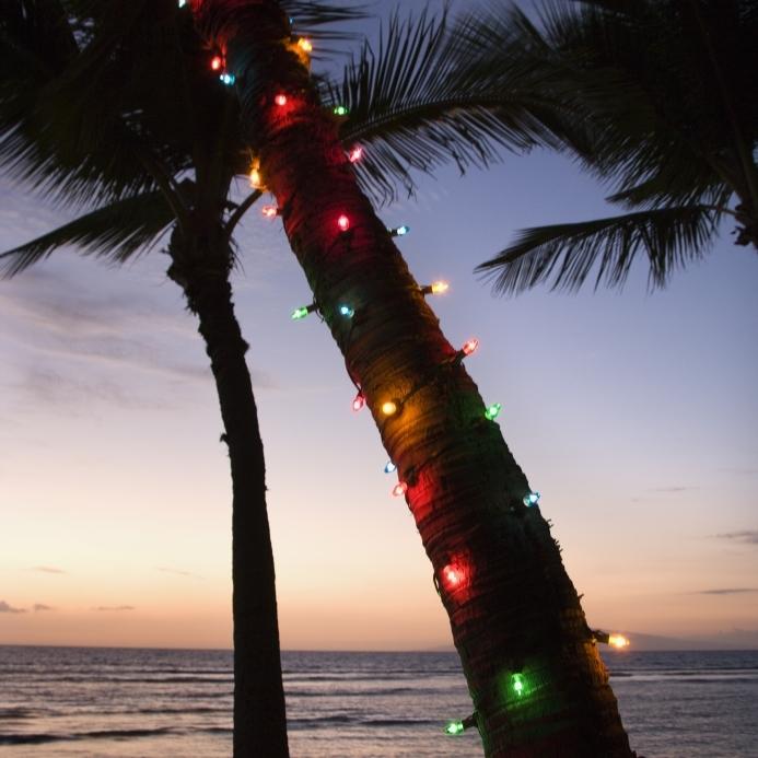 Palm Tree Christmas Lighting   Naples Landscape Lighting